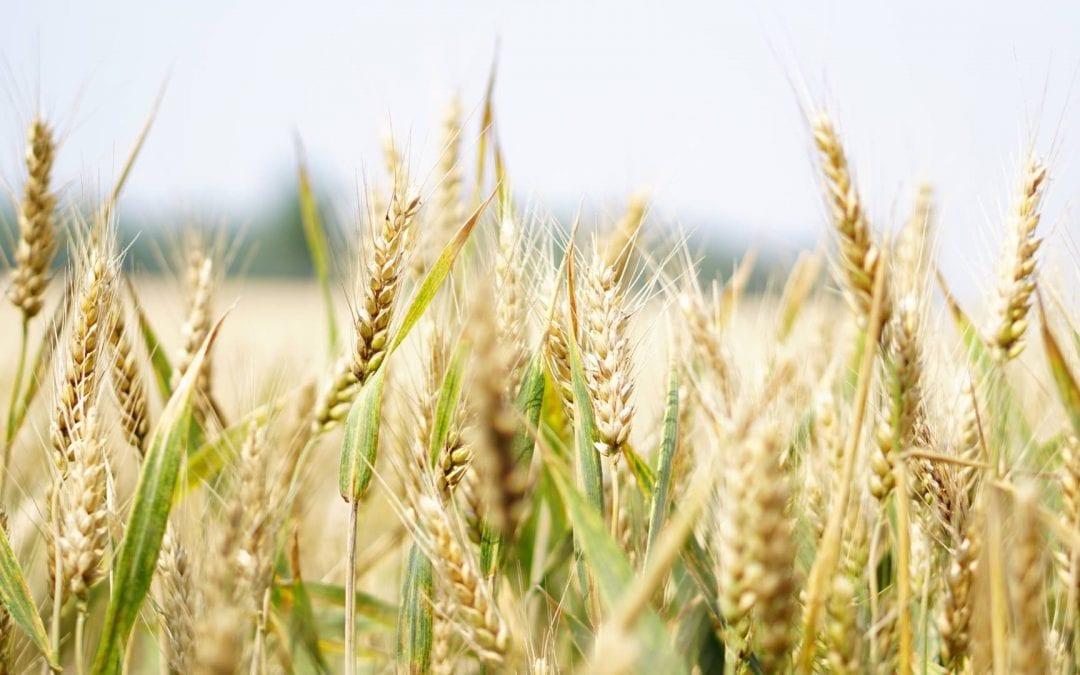 Allergie ou intolérance alimentaire, comment s'y retrouver ?