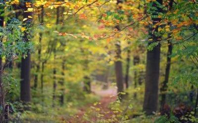 C'est l'automne ! Profitez-en pour vous réserver un moment de relaxation !